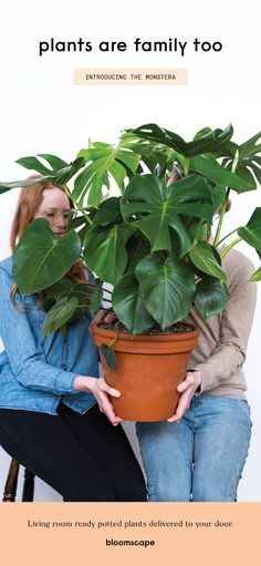 Bloomscape: Real life delivered. Living room ready potted plants delivered to your front door. Buy Indoor Plants Online, Large Indoor Plants, Large Leaf Plants, Potted Plants, Garden Plants, Vegetable Garden, Living Room Decor Inspiration, Plants Delivered, Interior Painting
