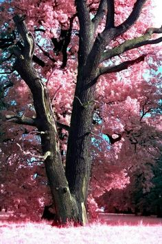 Hopes are planted in friendships garden where dreams blossom into priceless treasures. Ahh best tree ever All Nature, Science And Nature, Amazing Nature, Nature Tree, Spring Nature, Pink Trees, Jolie Photo, Nature Pictures, Pretty Pictures