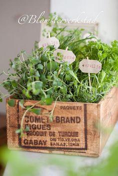 growing herbs in a wooden crate Container Gardening, Gardening Tips, Modern Garden Design, Hanging Pots, Grow Your Own Food, Growing Herbs, Edible Garden, Fresh Herbs, Fresh Basil