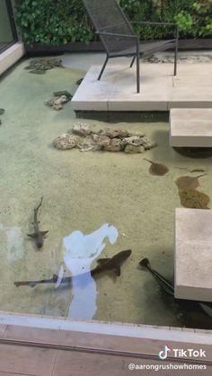 Aquarium - Famous Last Words Saltwater Fish Tanks, Saltwater Aquarium, Aquarium Fish Tank, Freshwater Aquarium, Modern Fish Tank, Unique Fish Tanks, Home Aquarium, Aquarium Design, Dream House Exterior