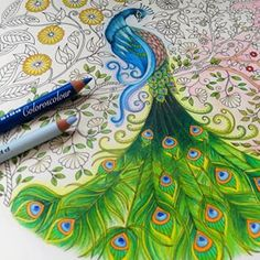 page is amazing! Peacock Coloring Pages, Coloring Book Pages, Chris Cheng, Enchanted Forest Coloring Book, Johanna Basford Secret Garden, Secret Garden Coloring Book, Johanna Basford Coloring Book, Coloring Tutorial, Polychromos