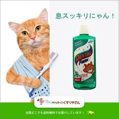 【フレッシュな息と健康な歯と歯茎のために】 1日に1回飲み水に入れておくだけで、ネコちゃんの歯石、歯垢を取り除き、息の臭いもスッキリさせる世界初の猫ちゃん用デンタルフレッシュです。ネコちゃんが水を飲むのと同時にお口の中を洗浄する、安全なマウスケア商品の登場です。http://bit.ly/2blvkpP #デンタルフレッシュ猫用 #ペットのくすりやさん #ペット #薬