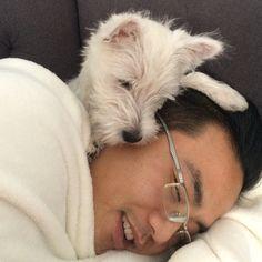 Daddy still has a nasty head cold so Pepper decides to keep him warm. #drpepper #cozy #puppylove #westie #westies #westitude #westiegram #warmandcozy #westiepride #westiesofinstagram #westhighlandterrier #puppy #doglover #dogs #duchessandpepper