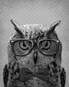 ~♛ He/She must be the smartest owl! He/She really hates those glasses, just look at it's eyes!!!