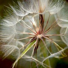 New free stock photo of nature garden blur #freebies #FreeStockPhotos