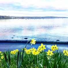 """Good Morning Sunrise ☀️ """" By opening your eyes today, you will be able to let go of your fears about what the future holds and instead become receptive to the mysterious workings of the universe. """"   #quotes #quotesoftheday #inspiration #spring #springtime #sunrise #sunrisebikeride #englishbay #lovelife #liveit #loveit #veryvancouver #citylife #urbanlife #daffodils #beauty"""