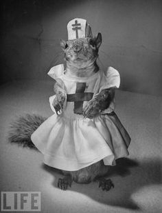 a surprisingly well dressed squirrel