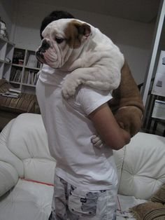 Have you hugged your Bulldog today? I swear every bulldog loves to be held this way! English Bulldog Puppies, British Bulldog, English Bulldogs, French Bulldogs, Positive Dog Training, Training Your Dog, Cute Puppies, Cute Dogs, Corgi Puppies