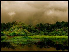 Deep vietnamese jungle