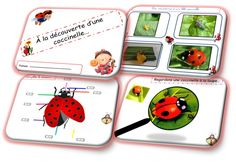 The Bugs, Bites, and Itches of Camping: What You Need to Know Bugs, Bug Crafts, Kindergarten, Design Palette, Science Lessons, Learn French, Animals For Kids, Pre School, Science And Technology