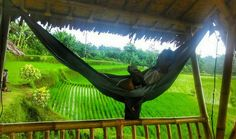 "Menikmati suasana persawahan dengan hammock @tickettothemoonhammock di ""Bukit Air Resto"" @bukitair Ciomas Kota Bogor Jawa Barat Indonesia  Enjoy the beautiful and unforgetable huts and scenery with @tickettothemoonhammock in the middle of farming area ""Bukit Air Resto"" @bukitair  Ciomas Bogor City West Java Indonesia  #bukitairrestobogor #sawah #farming #huts #saung #lunch #dinner #travel #traveling #bogor #travelingram #visitbogor #green #sunda #hammock #hammockid #salamgantung #hammocklife…"