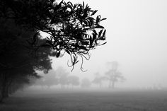 Fog and trees #2