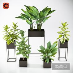 NEW Three Black Standing Planters 01 Bodbyn, Ficus, Plant Decor, Third, Wall Lights, Planters, 3d, Flowers, Model