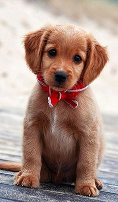 Adorable Puppy..!