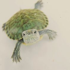 Adorable turtle