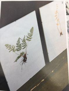 Gedroogde plant in lijst