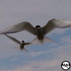 Bird Photos Around The World @birdextremefeatures Instagram photos | Websta