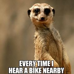 Dirtbikes Fahrrad Offroad And Motocross Motocross Quotes, Dirt Bike Quotes, Biker Quotes, Bicycle Quotes, Motocross Maschinen, Bike Humor, Motorcycle Memes, Women Motorcycle, Hors Route
