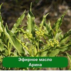 Эфирное масло Арина, 10 мл