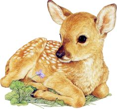 Deer Pictures, Animal Pictures, Cute Pictures, Animals And Pets, Baby Animals, Cute Animals, Woodland Creatures, Woodland Animals, Animal Sketches