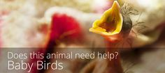 You've found a bird on the ground that you think might need help. What should you do?