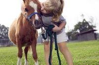 How to Train Miniature Ponies   eHow