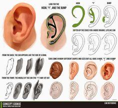tipos de orelhas - Pesquisa Google