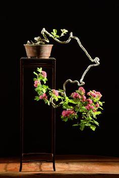 紅山査子の石付盆栽と鉢植え Hawthorn, Beni-Sanzashi, bonsai on a rock 2014.5.11 & 2014.5.6