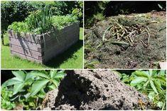 Leier magaságy Plants, Gardening, Garten, Flora, Plant, Lawn And Garden, Planting, Horticulture