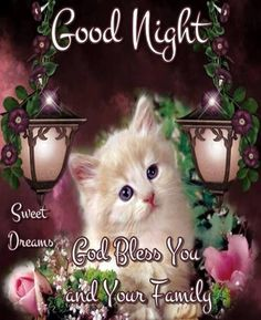 *♥Good Night, sweet dreams,God bless you and yours xxx♥ Hope you all have a restful, blessed sleep♥* Good Night Family, Good Night Cat, Good Night Prayer, Cute Good Night, Good Night Everyone, Good Night Blessings, Good Night Sweet Dreams, Night Night, Good Evening Greetings