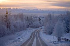 Wild journey Fairbanks Alaska