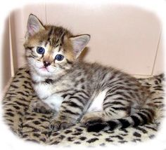This is such an adorable kitten!!!!