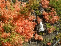 Brilliant Fall Foliage ~ Riding on the smaller chair lift at Park City Mountain Resort September 2015