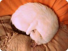 """Módulo 4: Fotografía sin rostro.  """"Yoga gatuno"""". En esta imagen vemos a Mirko, mi gato, durmiendo plácidamente en una posición digna de un yogui. No se ve su rostro ya que él mismo se lo cubre. Esto da cuenta de su flexibilidad y habilidad para dormir en cualquier lugar, incluso en donde hay mucha luz."""