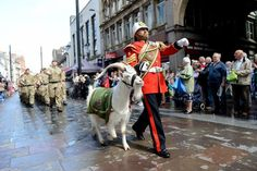 The Goat Major, Sergeant Jackson and the Mascot of the 3rd Battalion the Royal Welsh on parade in Cardiff. Photographer Corporal Barry Lloyd; Crown copyright.