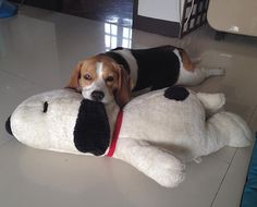 """""""Snoopy and I…"""""""
