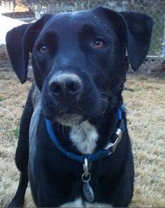 My dog Hogan. Karen, Montross, Virginia. 8/17/13.