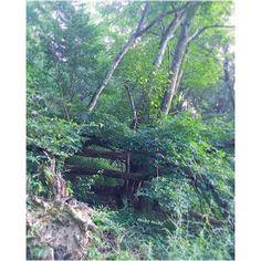 【miho_.3】さんのInstagramをピンしています。 《* 涼しい朝 / 白い空気が見える ▫️▫️▫️▫️▫️▫️▫️▫️▫️▫▫️️▫▫️️🍃▫️🌲▫️▫️ 疲れ目に 👀✨ お疲れさまでした みどりの癒し 朝方の山は 涼しいですよ。 * そうそう 小学生5年生の頃 偶然にも同じ頃に 村と呼ぶほどの田舎に引っ越してきた れいちゃんと私。 山に入って 倒れた木を集めて 隠れ家と呼びたかった木の小屋を作ったり 村中に流れるきれいな川に入って その山側の岩砂の壁を夢中で削って 掘って 化石を発掘しに行こう!と2人意気込んでたり。 毎日お猿のように 太陽の下で きれいな空気の中で遊んでた。 そんな田舎に時代劇の撮影隊がやってきた。 「君たちはいつも(こんな田舎で)何して遊んでるの?」と、テレビにでてる都会の俳優さんに聞かれて (小屋作ってる。化石掘ってるって言えなかったし) 「カエルと田んぼでディスコ」🙂って答えたらとても ゲラゲラ笑顔で笑ってくれた。うけた♡ ちょっとカッコよく答えたかったつもりやけど… ずいぶん昔の話だけど 全部楽しい夏の思い出😊 おわり…