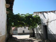 Hermoso rincón emparrado de Oliva de Plasencia, en las Tierras de Granadilla, muy cerca de Cáparra.