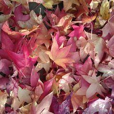 feuilles-2