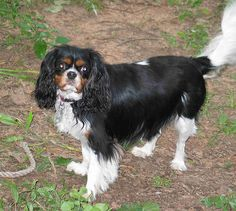 Waggin by cobalt in CT, via Flickr