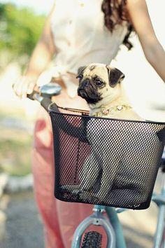 Quiero una bici solo para hacer esto!