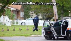 canadian police funny pictures - Dump A Day Funny Shit, The Funny, Funny Memes, Funny Stuff, Funny Things, Hilarious, Random Stuff, Crazy Funny, Canadian Memes