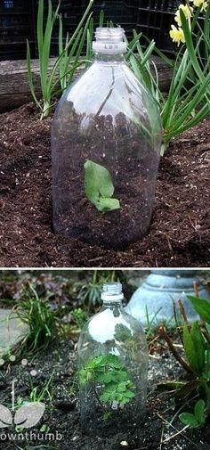 Alternative Gardning greenhouses made from plastic bottles