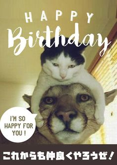 Happy Birthday Animals, Happy Birthday Wishes Cards, Cat Birthday, Birthday Messages, It's Your Birthday, Birthday Cards, Cute Baby Animals, Animals And Pets, Funny Animals