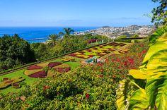 Huikaiseva kukkashakki ruohoterassilla, josta avautuu yksi Madeiran…