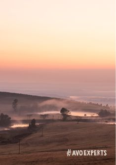 Westfalia Fruit's Everdon Estate in Howick, KwaZulu-Natal, is found in what is known as a mist-belt. This results in cooler temperatures, making it possible for the fruit to hang on the trees for longer – producing an even better-quality harvest.