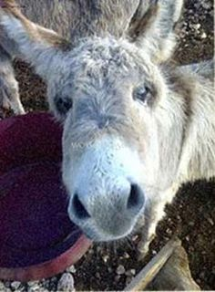 Workaway in . Help on a organic donkey farm, Italy