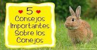 Si estás considerando integrar un conejo a tu familia, asegúrate de investigar para entender bien el nivel de cuidado que necesitan los conejos mascota. http://mascotas.mercola.com/sitios/mascotas/archivo/2015/11/07/consejos-importantes-para-cuidar-conejos.aspx