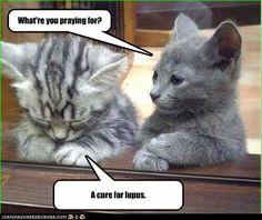 Kitty Prayer for Lupus Cure #Lupus #Sjogrens #spoonie #spoontheory #Autoimmune